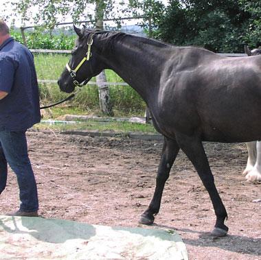 Nerven Pferd