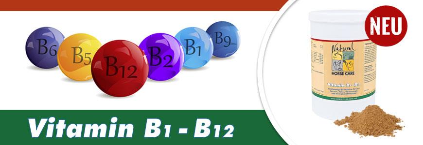 NEU - Vitamin B1 bis B12 in unserem Shop
