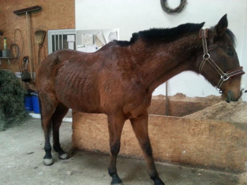 Homöopathie Pferd