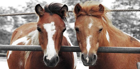 Durchfall Kotwasser Probiotika Pferd
