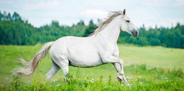 Mineralfutter Pferd Weide