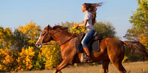 Muskelaufbau Pferd Zusatzfutter