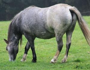 wohlgenaehrtes Pferd