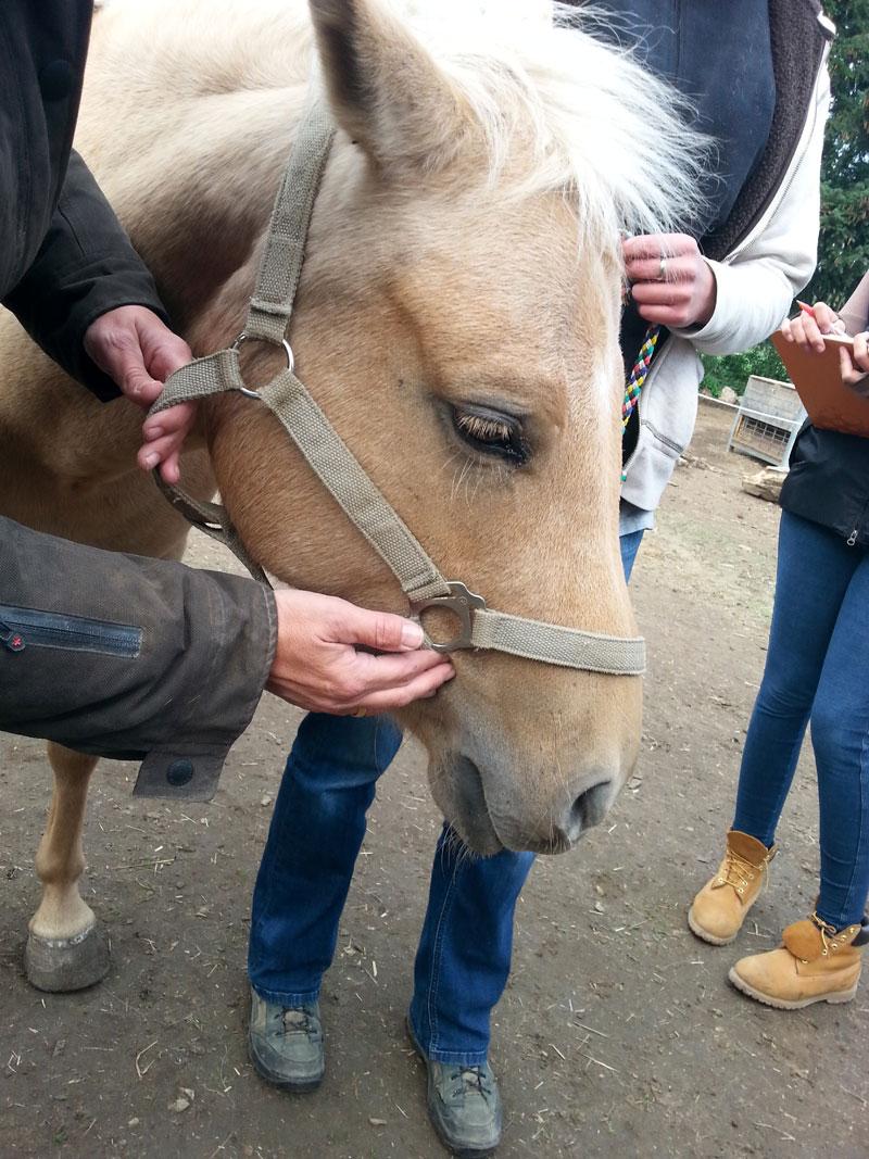 Zaehne Pferd