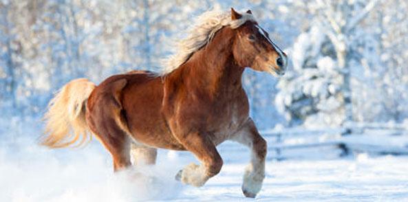 Fellwechsel beim Pferd - jetzt an Vitalstoffe denken.