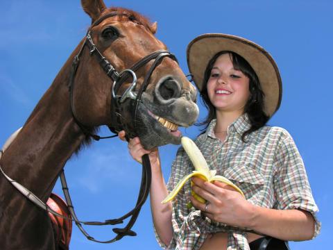 Darf ich Bananen an ein Pferd verfüttern. Wie schädlich ist der Zucker der Banane beim Pferd?