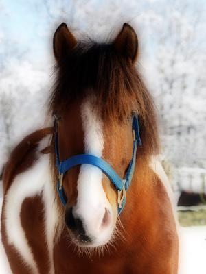 Fütterung Pferd Winter