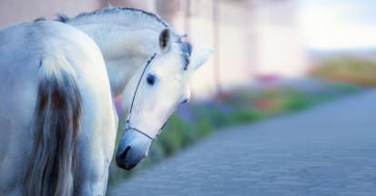 Kolik Pferd - Lebensgefahr. Ursache und Behandlung