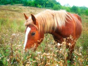 Kräuter Pferde