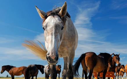 Pferd Gesundheit PerNaturam
