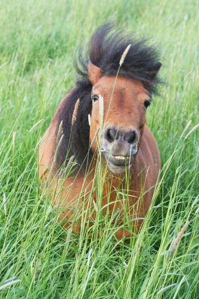 Weidegang Pferd