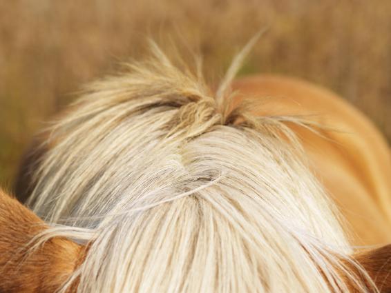 Zinkmangel beim Pferd
