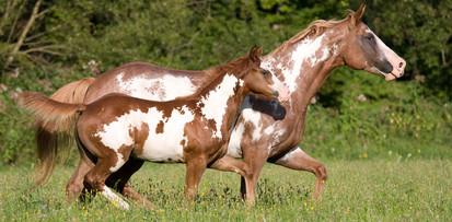Mit der richtigen Bewegung können Pferde wieder gesund therapiert werden