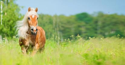 Bierhefe liefert dem Pferd wichtige Aminosäuren und B-Vitamine. Täglich 50 Gramm reichen als Dosierung aus.