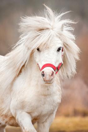 Blutbild Pferd 1