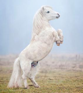 blutbild-pferd-2