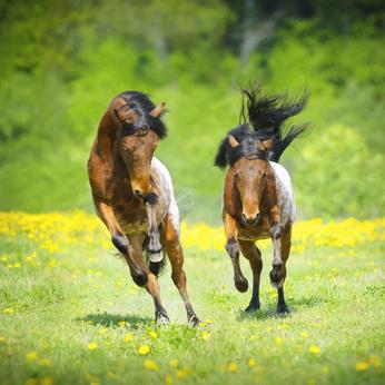 Darm Pferd