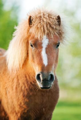 Effektive Mikroorganismen beim Pferd