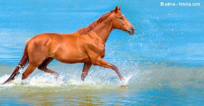 Elektrolyte gehen mit dem Schweiß der Pferde verloren. Tipps zur Fütterung wenn Pferde schwitzen.