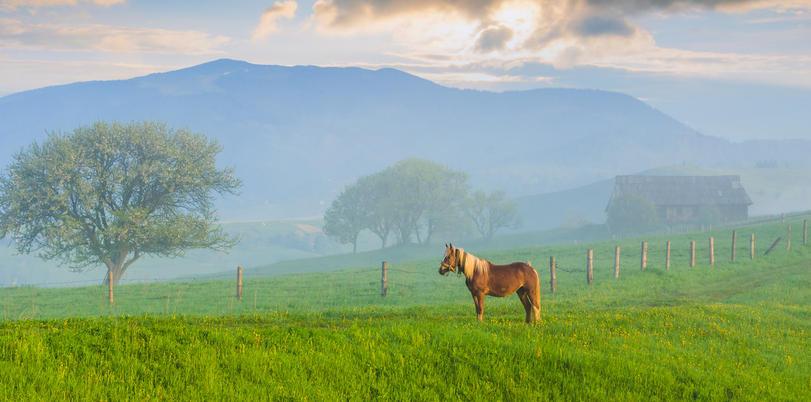 Leber und Nieren beim Pferd sollten kurweise entgiftet werden.