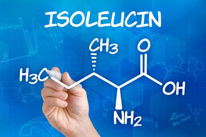 Die essenzielle Aminosäure Isoleucin unterstützt die Muskulatur beim Pferd und ist für die Insulinausschüttung mit verantwortlich.