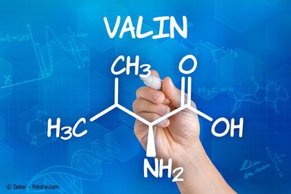 Die Aminosäure Valin ist für den Muskelaufbau des Pferdes essentiell