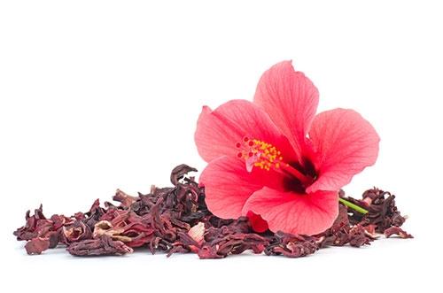 Hibiskusblüte - harntreibend, antibakteriell und Stoffwechsel anregend