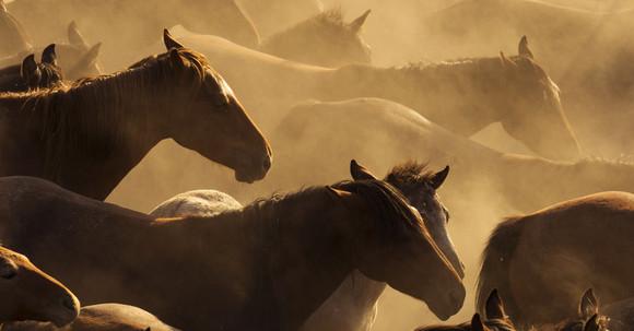 Kotwasser beim Pferd hat unterschiedliche Ursachen - Wie kann Kotwasser richtig behandelt werden?