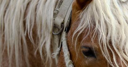 KPU beim Pferd - Kryptopyrrolurie beschreibt lediglich Symptome beim Pferd.
