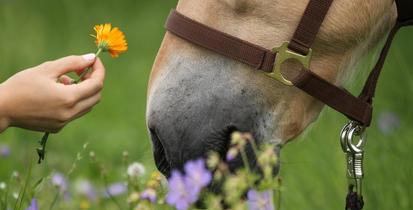 Die Leber des Pferdes. Wie entgiften?