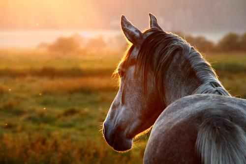 Leberschaden - oder erkrankungen beim Pferd haben unterschiedliche Ursachen