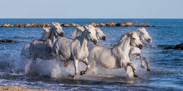 Stress, Medikamente, Futterpausen uva. lösen Magengeschwüre beim Pferd aus.