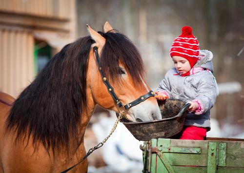 Mineralfutter Pferd Vergleich