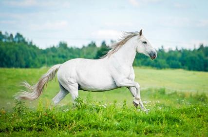 mineralfutter-pferd-weide