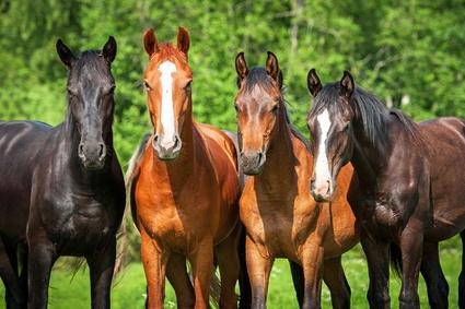 Mineralfutter Pferd