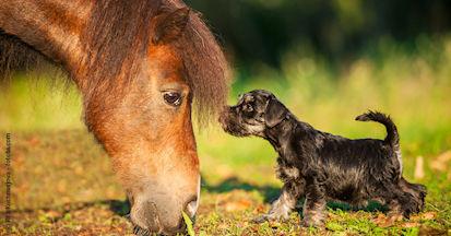 MSM - eine organischer Schwefel für das Pferd - alles über Wirkung und Dosierung.