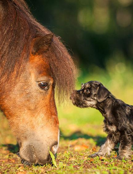 MSM bei Pferden mit Gelenkproblemen - Arthrose, Arthritis u.s.w.