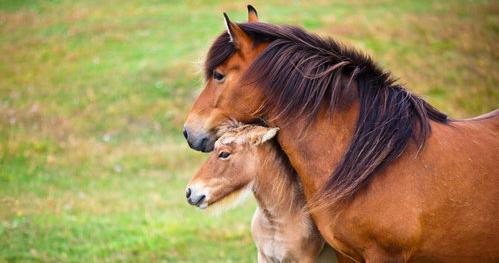 Niere beim Pferd - wie entgiften, welche Kräuter sind gut für die Nieren?
