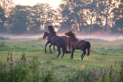 Die Aufgaben der Nieren beim Pferd.