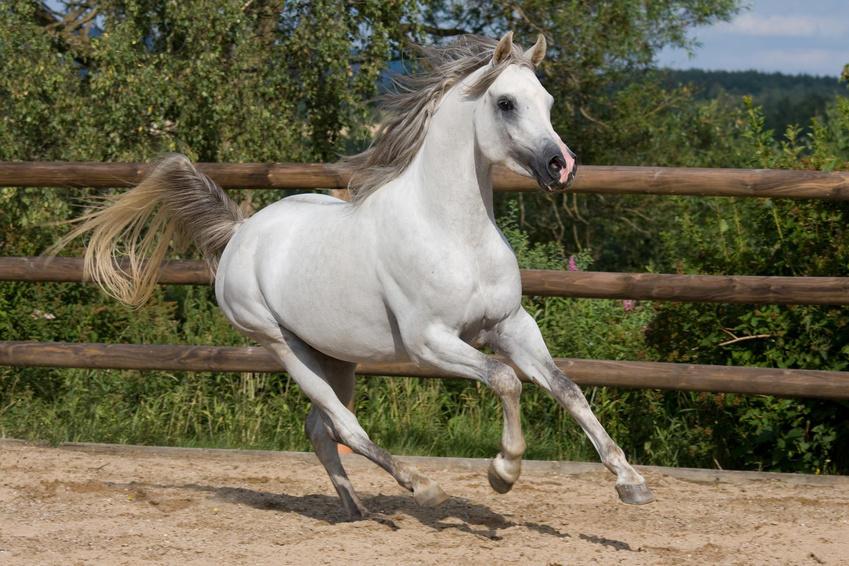 Nicht nur der Blutzuckerspiegel bei Pferden wird durch Bewegung (z.B. Equikinetic) gesenkt, sondern auch Glückshormone werden beim Pferd freigesetzt.