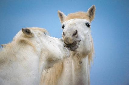 Viele Stoffwechselprobleme beim Pferd deuten auf einen gestörten Entgiftungs-Stoffwechsel hin.