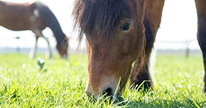 Pferde richtig Anweiden - Das ist zu beachten