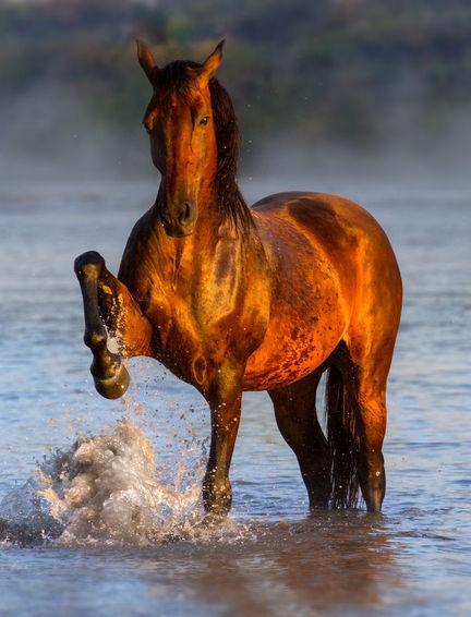 Reisschalenkleie beim Pferd - Fütterung hat auch Nachteile. Zucker und Stärke sehr hoch.