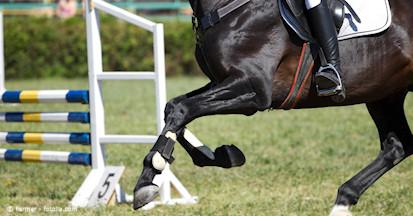 Verletzungen an der Sehen beim Pferd - wie behandeln oder Sehnenschäden vorbeugen?