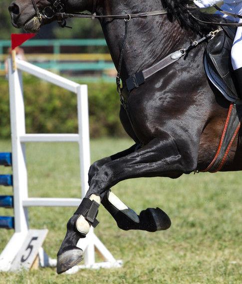 Was tun, wenn die Sehne beim Pferd angeschwollen ist?