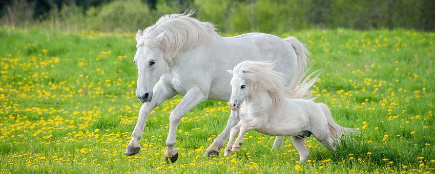 Diagnose Selen im Blutbild beim Pferd - was tun?
