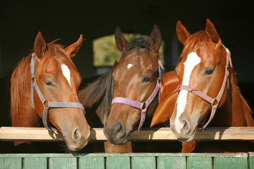 Selen beim Pferd - Wie wichtig ist das Spurenelement beim Pferd. Was tun bei Selenmangel