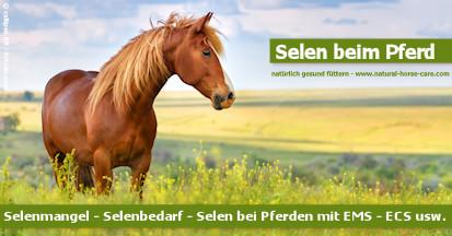 Lesen Sie mehr über Selenmangel beim Pferd.