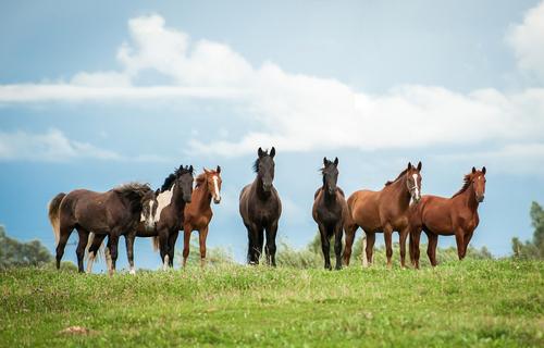 Täglicher Selenbedarf beim Pferd. Auf der Weide ist der Selengehalt zu niedrig.