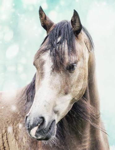 Raketen und Böller zu Silvester machen Pferde schreckhaft.